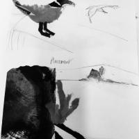 CB&W:  Birds