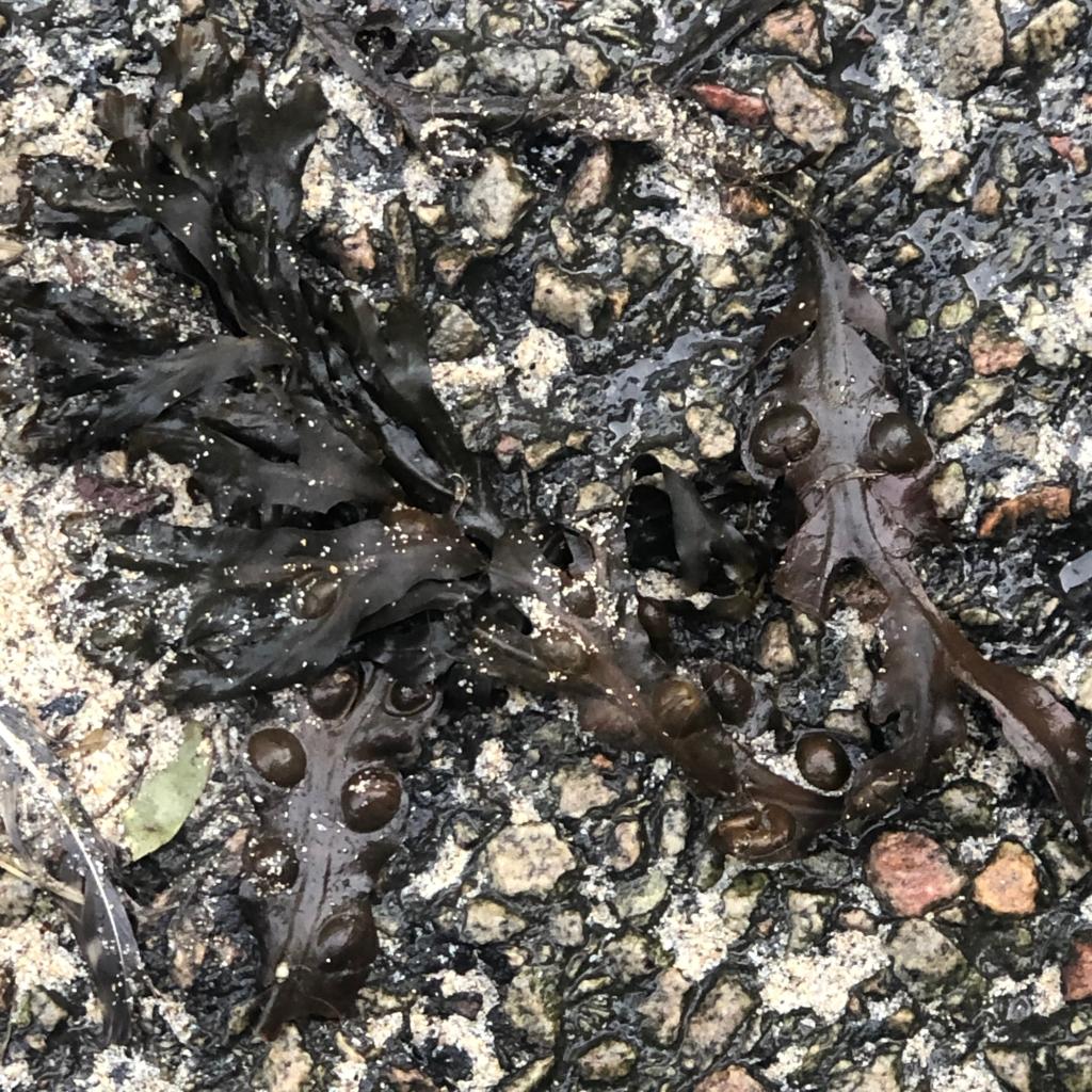 Seaweed Green?