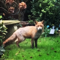 My Bright Everyday Moment- Watching the wildlife in my garden